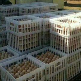 种蛋运输筐 种鸡厂用蛋筐 配合种蛋托用塑料筐