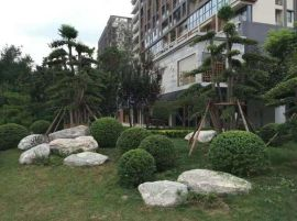 泰山石,草坪点缀石,泰山石假山案例图,鱼池围边石1