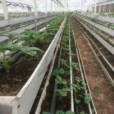 大型連棟溫室 無土栽培 草莓種植大棚