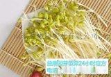 学习芽苗菜培育的技术-益康园芽苗菜