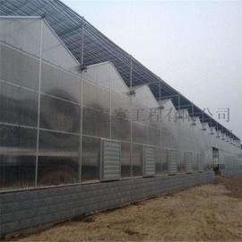 阳光板温室大棚批发 厂家直销 花卉大棚