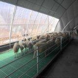 供应甘肃羊用塑料床羊用漏粪床  漏粪板厂家