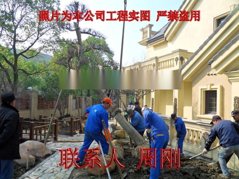蘇州別墅綠化工程 庭院苗木種植基地 園林綠化設計