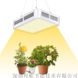 300W LED全光谱 植物补光灯 生长灯厂家
