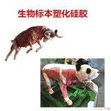 动物标本塑化硅胶 仿真标本塑化硅胶
