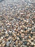 山西五彩鹅卵石   永顺河滩石多少钱