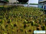 哪可以学习芽苗菜种植的技术-益康园