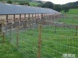 护栏网防护网草原围网花园围网道路围网