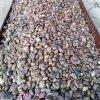 机械垫层砾石 天然鹅卵石 园林建筑用鹅卵石