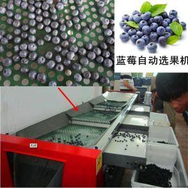 全自动蓝莓分选筛子蓝莓自动选果机