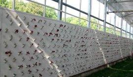 PVC斜插式墙体栽培板