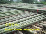 批發5米-10米大棚竹竿,2.5米菜架竹,3-4米旗杆竹,竹梢及毛竹