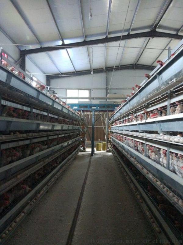 低碳钢丝电镀锌鸡笼子 石家庄鸡笼子 三层四门鸡笼子