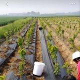 防草布生產廠家 果園除草地布規格