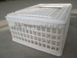 塑料鸡笼 成鸡肉鸡转运笼 青年鸡运输笼