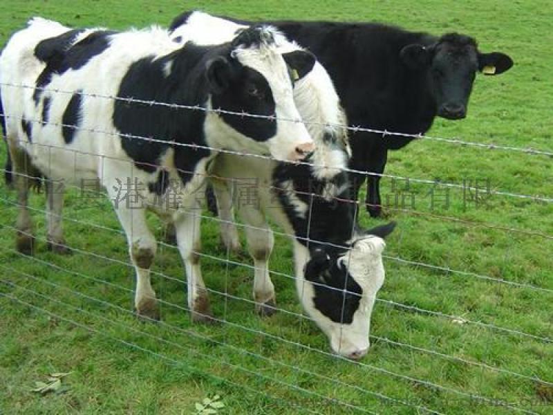 養殖用牛欄網草原網,草原網