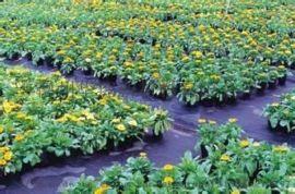 黑色编织布质优价廉、防草布厂家供应、防草布地钉