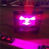 多肉植物LED补光灯防水雾花卉培育LED植物灯厂家