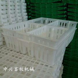 厂家直销鸡苗周转箱 塑料雏鸡箱小鸡苗筐子