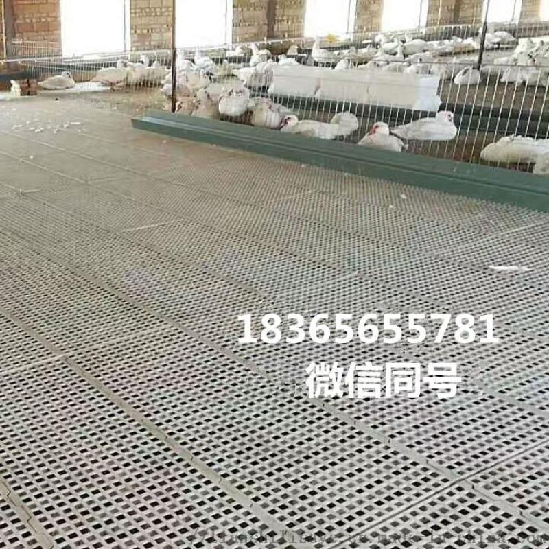 养鸡漏粪板养鸡塑料漏粪板鸡用漏粪地板