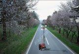高杆移动照明车(SFW6110)