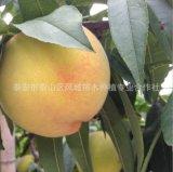 桃树多少钱 桃树哪里有