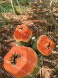 木瓜烘干机专业水产品烘干设备,便宜木瓜烘干设备