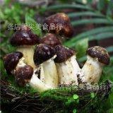 江西茶树菇灭菌锅 菌棒高温杀菌锅 高压食用菌灭菌