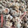 雲南滿澤三七價格比市場低又好的原因