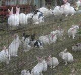厂家直销养殖兔笼兔子窝铁丝兔笼