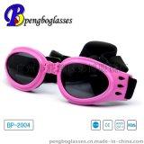 宠物太阳眼生产厂家-专注眼镜OEM贴牌生产