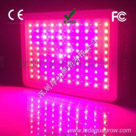 高性价比厂家供应300W LED植物灯,植物迷你灯,温室大棚种植
