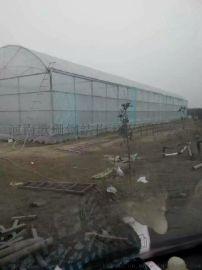 南阳连栋薄膜温室大棚出租-河南歌珊温室承建