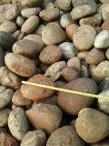 河卵石廠家 河北保定3-5公分河卵石生產廠家