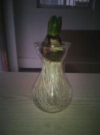 水培花瓶风信子玻璃瓶