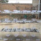 廠家出售三層鴿籠養殖鍍鋅鴿籠常年有現貨