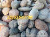 鶴壁2-6釐米鵝卵石   永順鋪路鵝卵石廠家