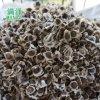 雲南辣木籽多少錢一斤/昆明哪裏賣