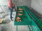 供应小型全自动柑橘分选机