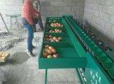 供應小型全自動柑橘分選機