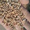 供應麥飯石粉 麥飯石顆粒 麥飯石超細粉 麥飯石飼料粉