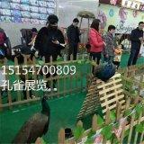 动物出租 动物展览 动物表演 动物租赁公司