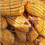 延邊圈玉米網價格*農業鐵絲網廠家
