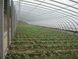 日光温室大棚,薄膜温室大棚,温室大棚建设