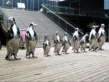 不鏽鋼動物雕塑造型豐富表現性強雕塑公園廣場擺件