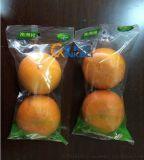新科力-水果臍橙包裝機 柑橘包裝機 血橙包裝機