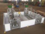 養豬場自動化養豬設備