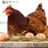 宿迁青年鸡光照,青年鸡补钙,青年鸡补充沙粒补钙