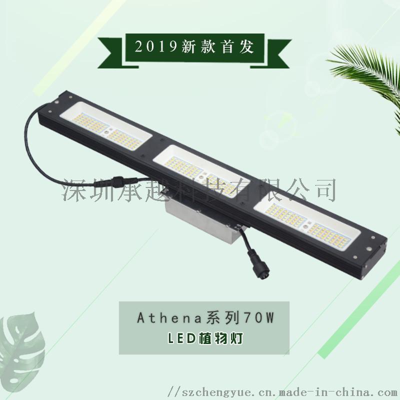 承越led植物生长灯厂家led灯具大棚种植灯