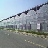 大棚廠家建設薄膜溫室連棟薄膜溫室造價